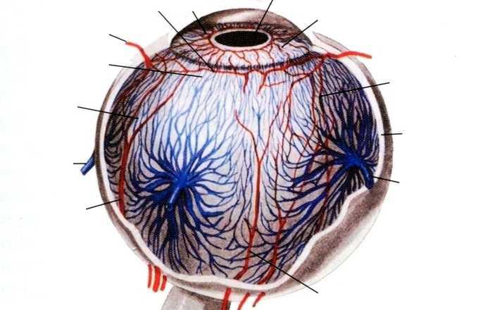 Капли для глаз инокса