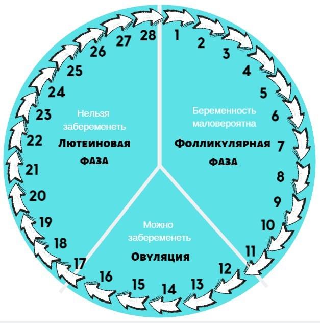 Фазы менструационного цикла по дням, схема
