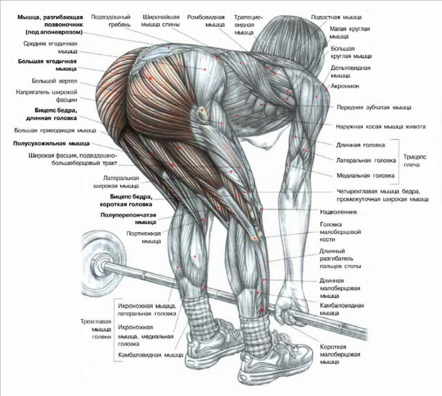 Мышцы