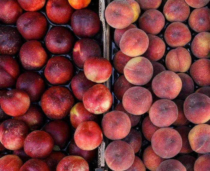 Персик и нектарины