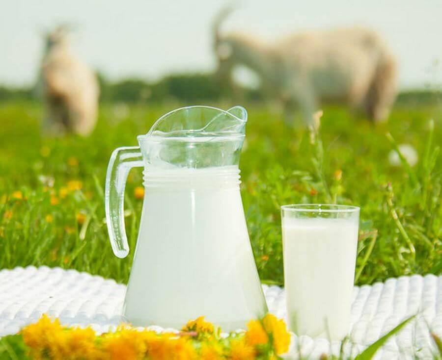 козье молоко легче переваривается ЖКТ крохи