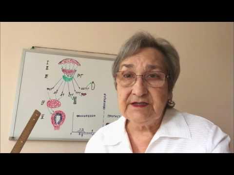 Фазы менструального цикла: схема по дням