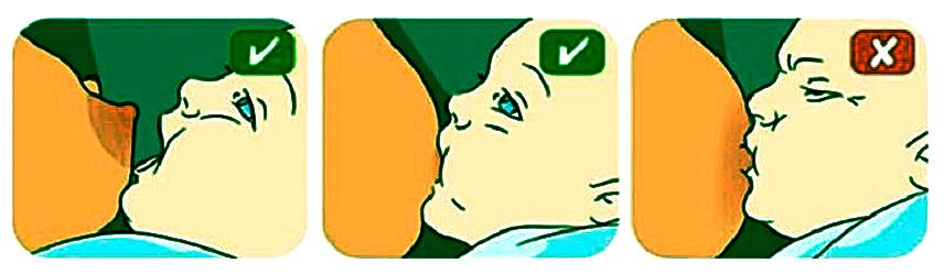 схема расположения ротика ребенка при кормлении
