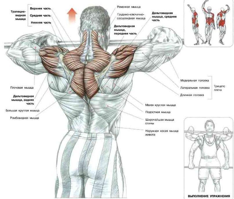 Работа мускулатуры