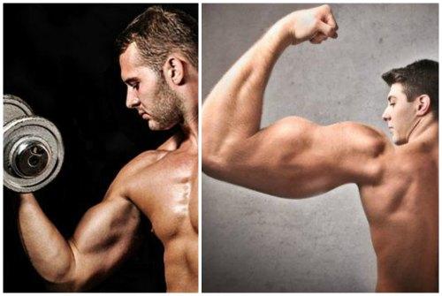 мускулы плеча