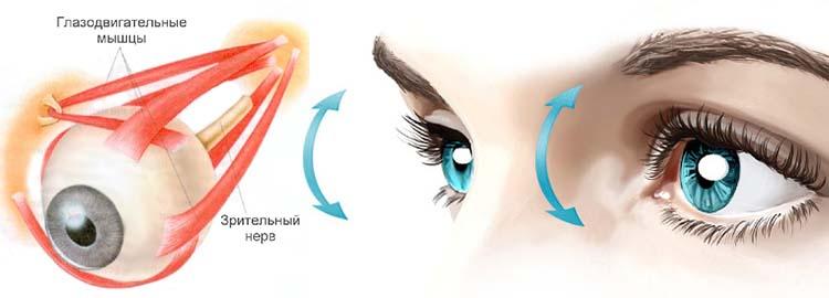 Укрепление глазных мышц.