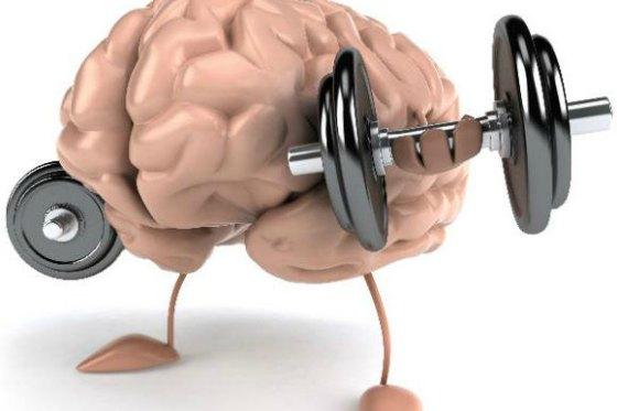 Связь мозга и мышц