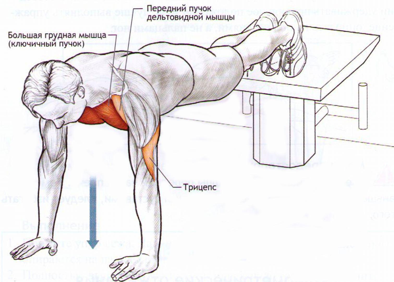 Таргетируемые мышцы во время отжимания узким хватом.
