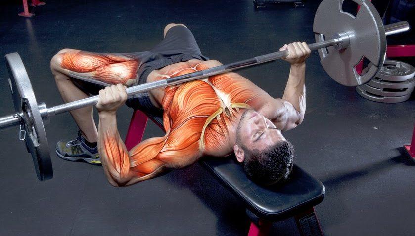 Мышцы при жиме штанги