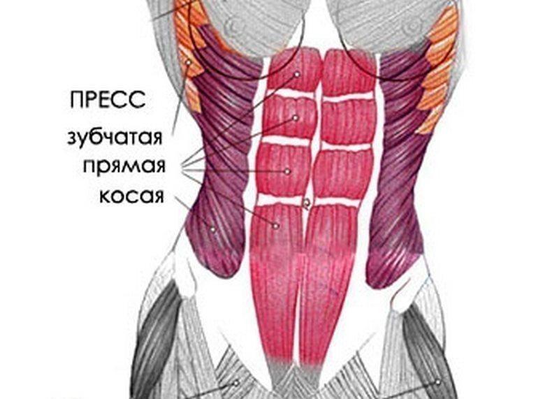 Мышцы пресса.