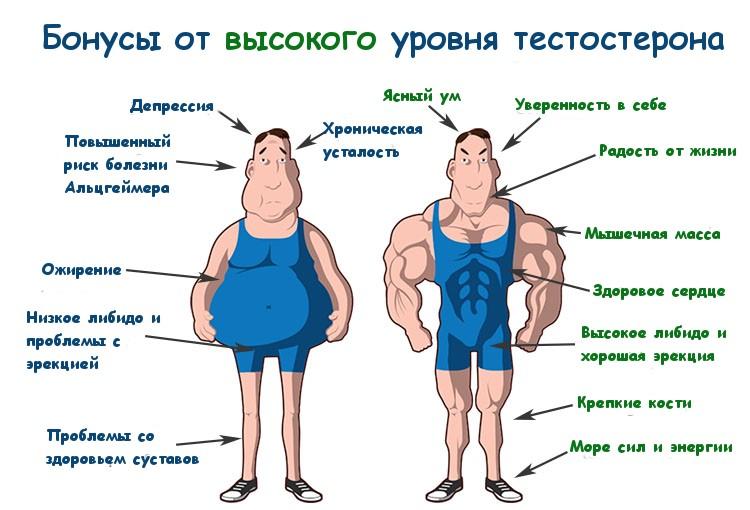 Что дает норма тестостерона у мужчин