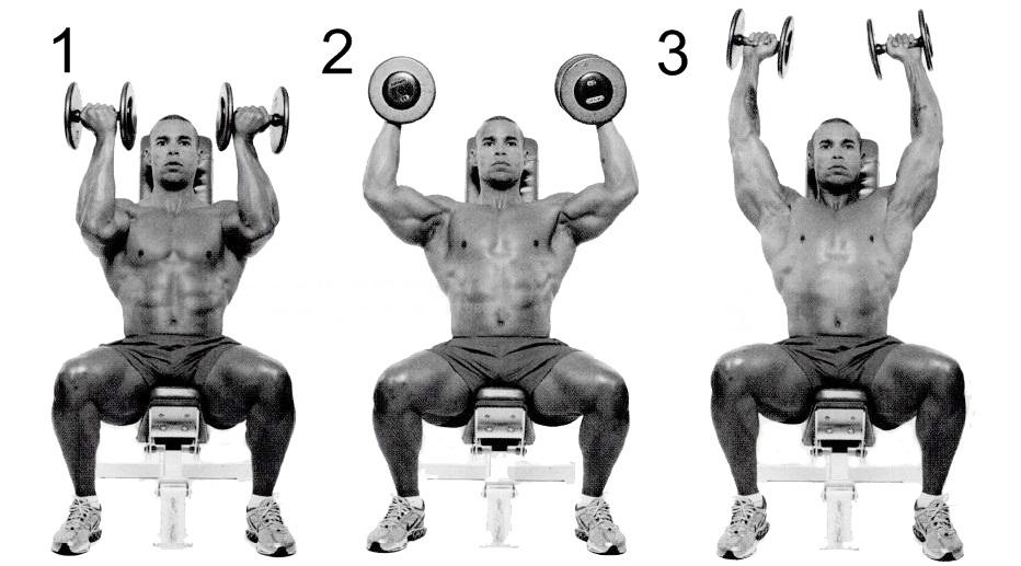 3 фазы упражнения