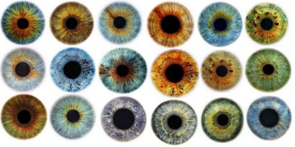 Цвет радужки глаза