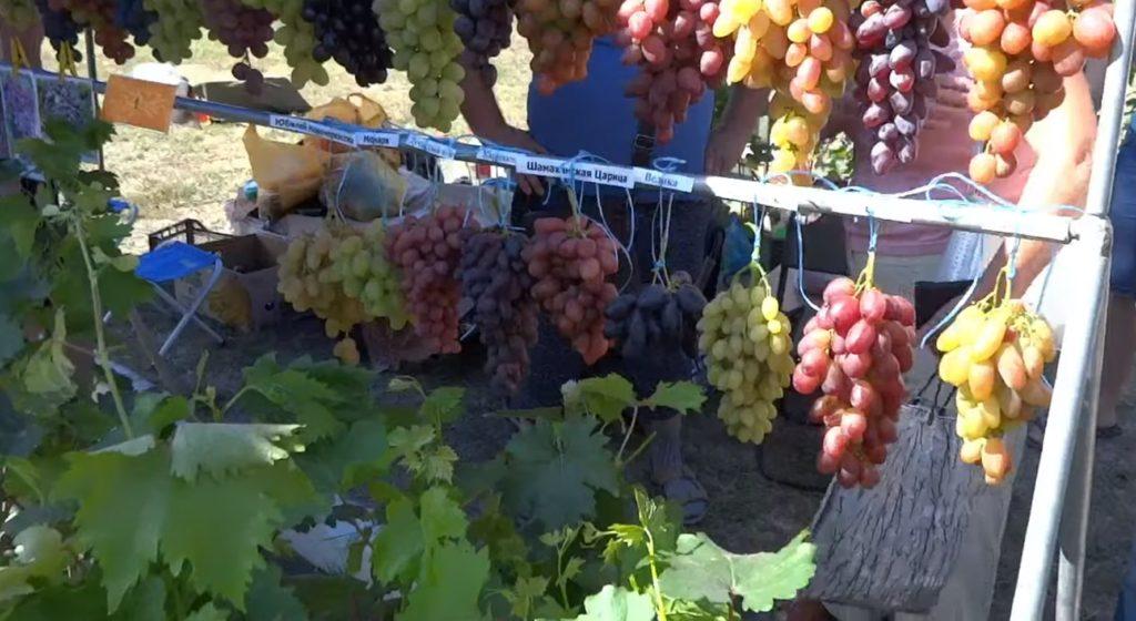 Сорта и цвета винограда на рынке
