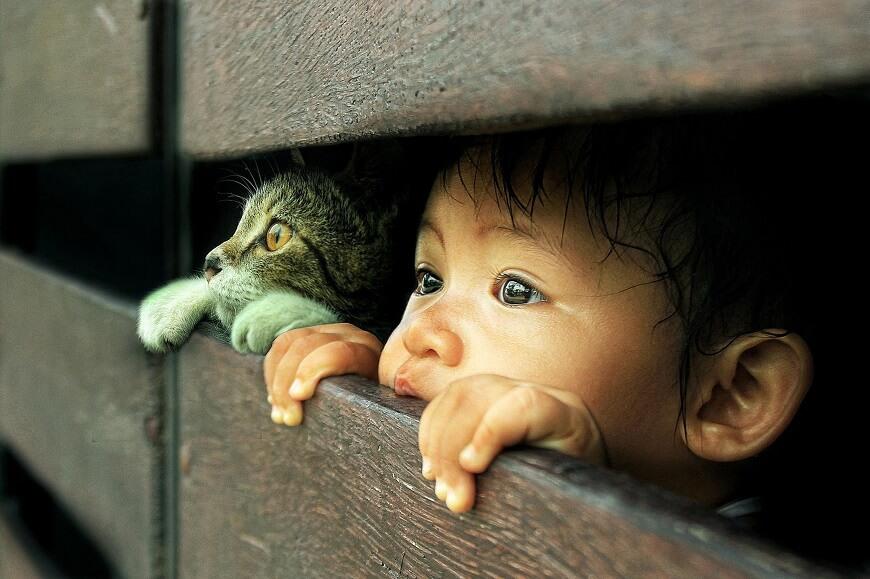дети любят домашних животных