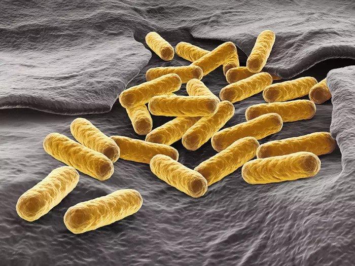 Бактерии кишечной палочки