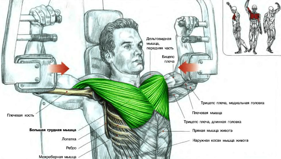 Атлас мышц