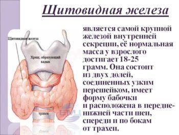 Что такое щитовидная железа