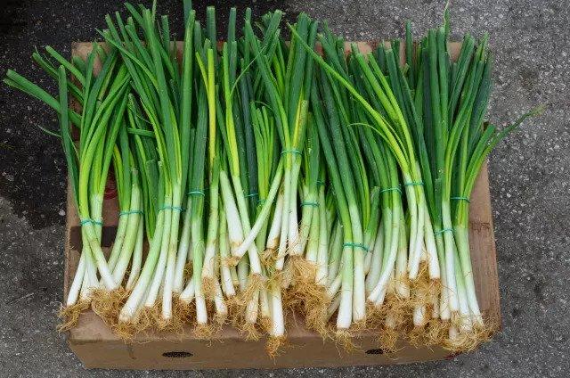 Зеленый лук - витамин А и витамин С