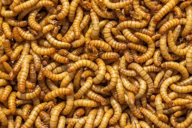 Микробы и волосыки грызунов