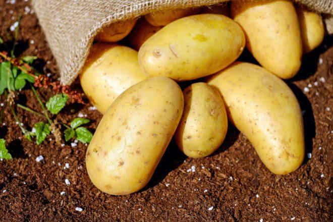 Как и когда вводить картофель в прикорм грудничку: как выбрать и приготовить пюре