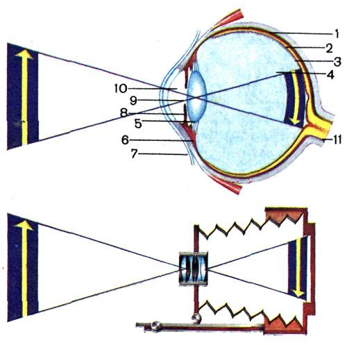 роговица глаза функции